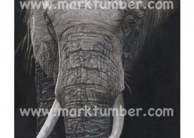 Mark Tumber_ TITAN II 16.5x20.5