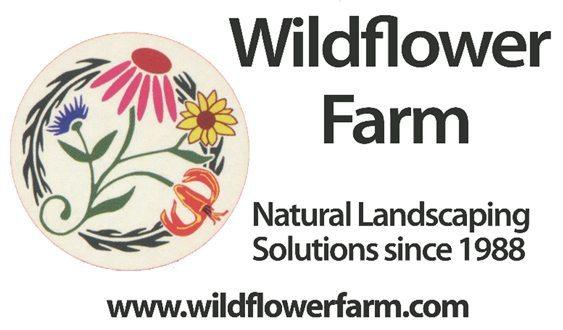 Wildflower Ad