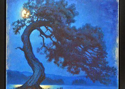 midnight pine